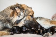Panka et ses bébés