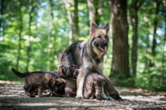 Panka et les bébés