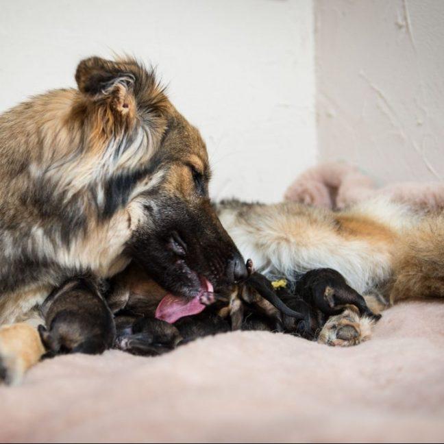 Panka et ses bébés5
